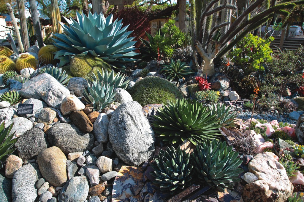 Cactuses and succulents in creative layouts can enhance a garden's aesthetic.