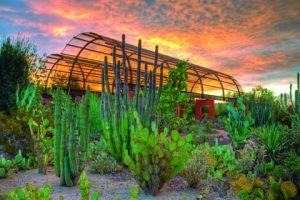 Desert Botanical Garden | Photo Courtesy of cottsdale Convention & Visitors Bureau