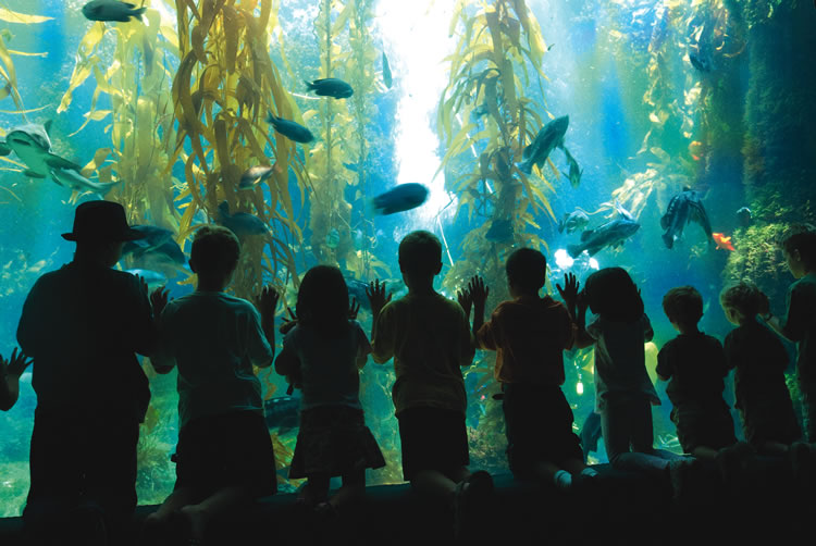 Birch Aquarium | Courtesy of Birch Aquarium